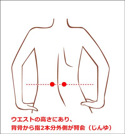 腎兪の位置イラスト
