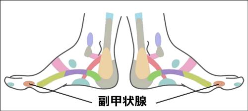 足ツボ副甲状腺