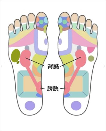 足ツボ腎臓・膀胱