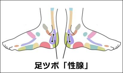 足ツボ性腺
