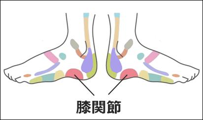足ツボ「膝関節」