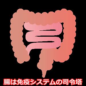 腸 イラスト