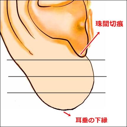 耳たぶのツボ解説1