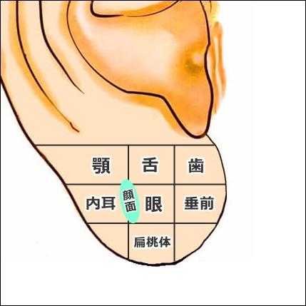 耳たぶのツボ解説2