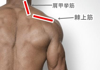 肩甲挙筋と棘上筋
