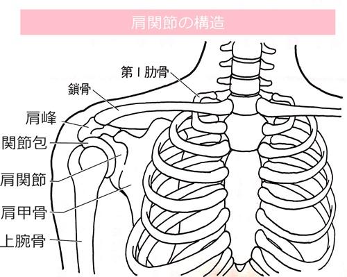 肩関節イラスト
