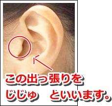 耳珠の位置