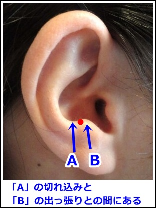耳ツボ縁中の位置