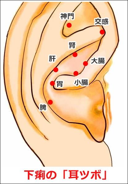 下痢の耳ツボ