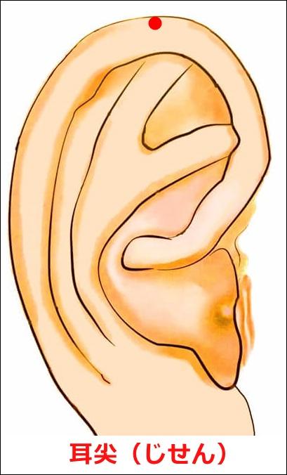 耳ツボ耳尖