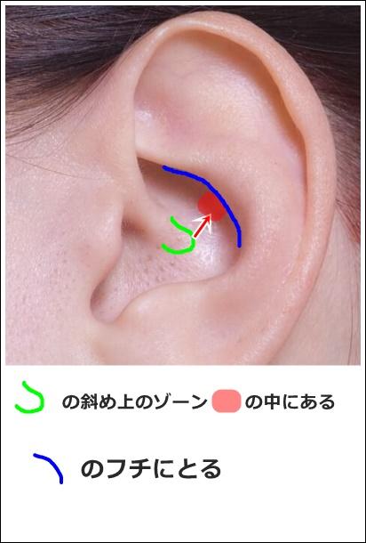 耳ツボ肝の位置