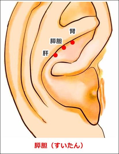 耳ツボ膵胆の位置