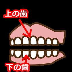 上の歯と下の歯のイラスト