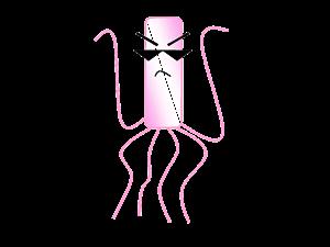 細菌イラスト