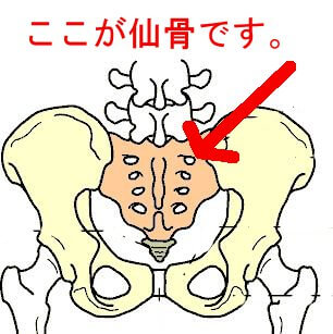 骨盤の仙骨部分