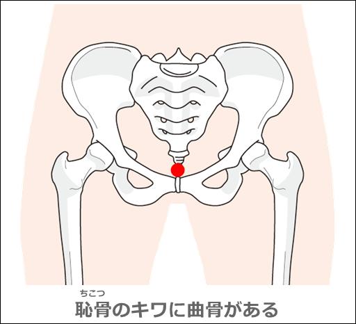 曲骨の位置