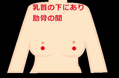 乳根の位置