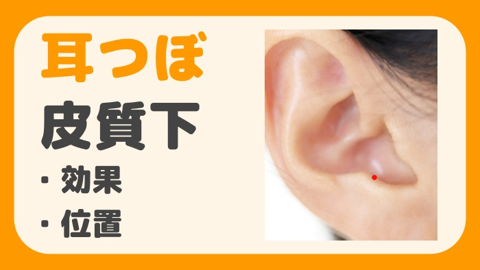 耳つぼ皮質下