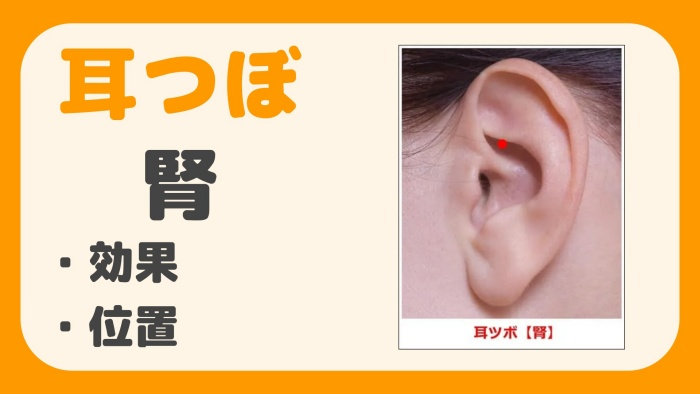 耳つぼ 腎