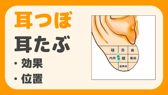 耳つぼ耳たぶ