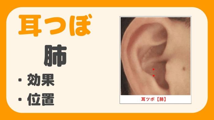 耳つぼ 肺