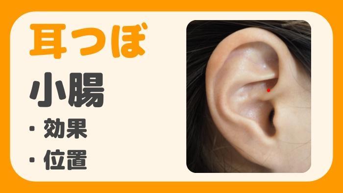耳つぼ小腸