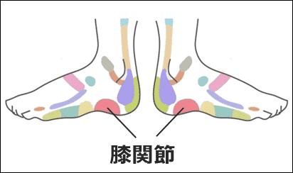 膝痛の「足ツボ」