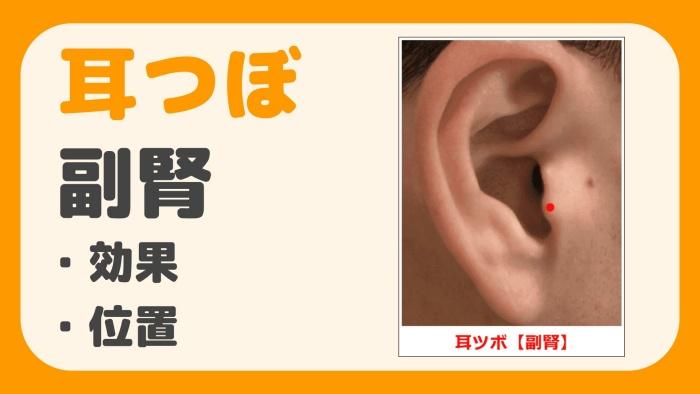 耳つぼ 副腎