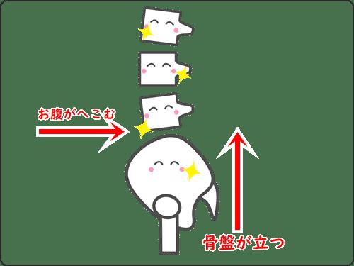 良い姿勢の骨盤イメージ