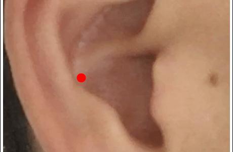 耳ツボ【脾】