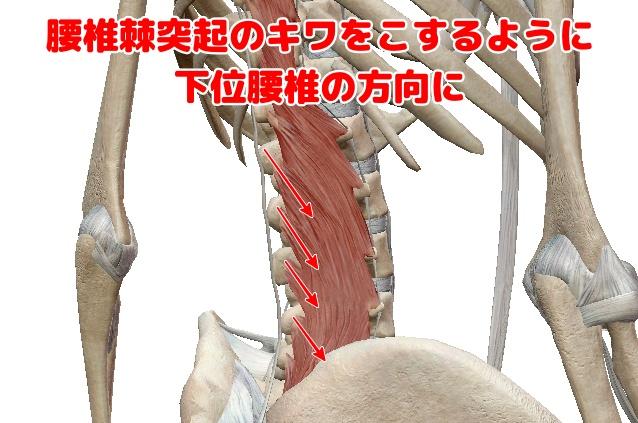 多裂筋の鍼灸治療